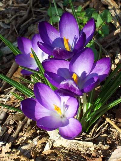 Plant of the Week 01/15/2021