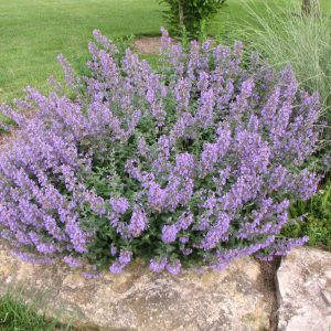 Plant of the Week 08/17/2018