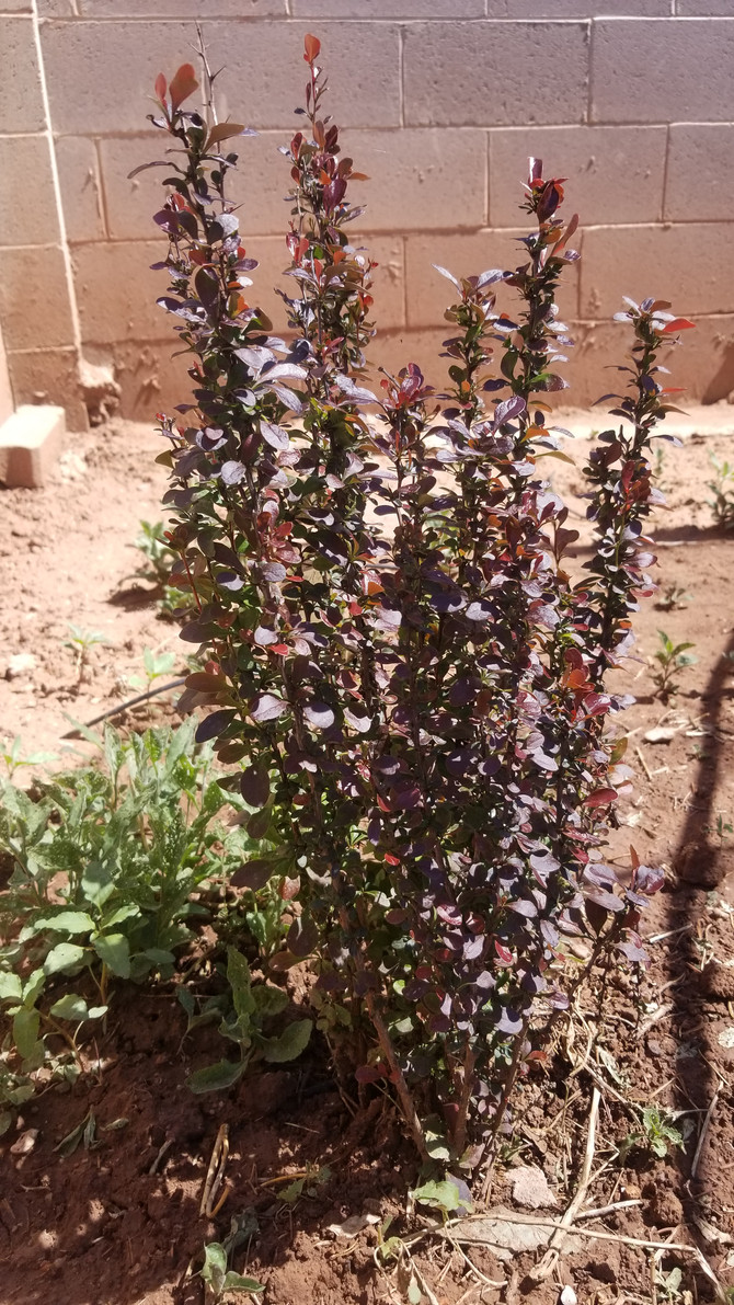 Plant of the Week 07/26/2019