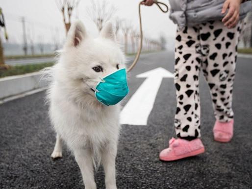 NOVO CORONAVÍRUS: Afinal, cães e gatos podem contrair e/ou transmitir o vírus?
