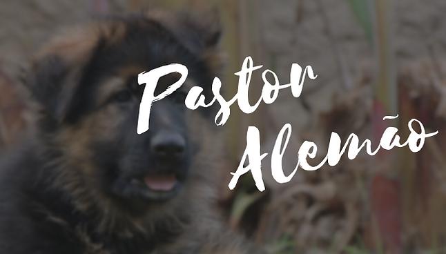 Pastor Alemão (5).png