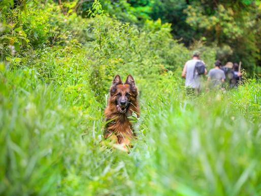 Cachorros na quarentena: falta de atividade pode deixar pets ansiosos mesmo com casa cheia