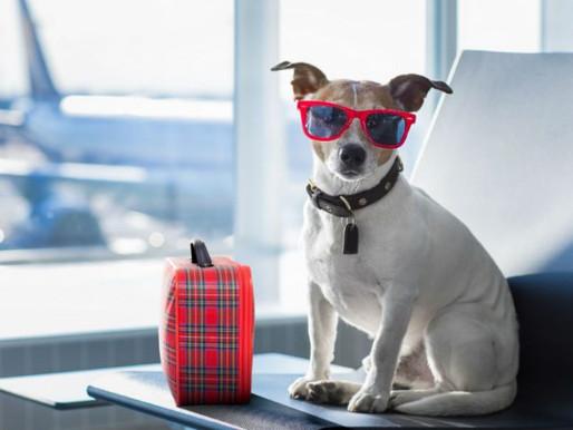 Quais os documentos necessários para viajar de avião com cães e gatos?