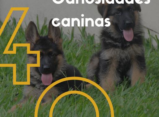 Curiosidades sobre cachorros: 40 coisas que você pode aprender a respeito dos caninos