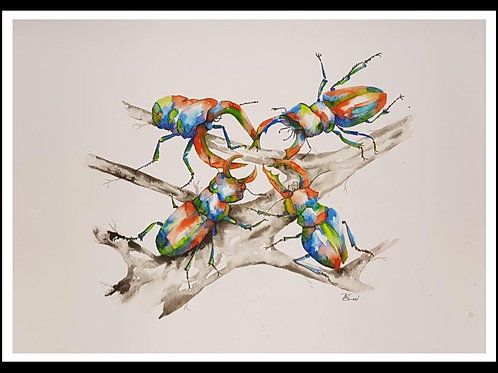 Dance Of The Stag Beetles 2