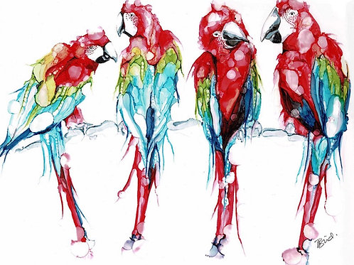 Four Macaws