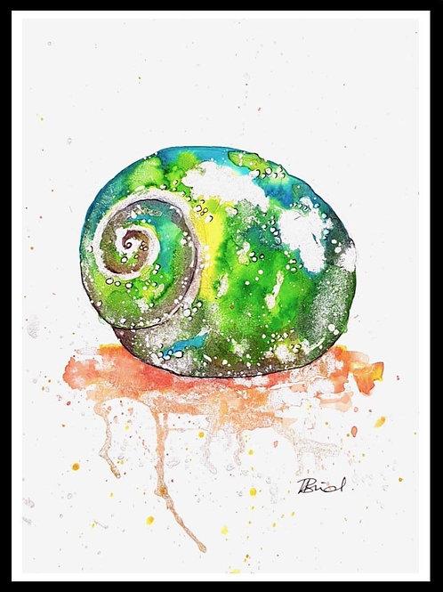 Green Spiral Shell