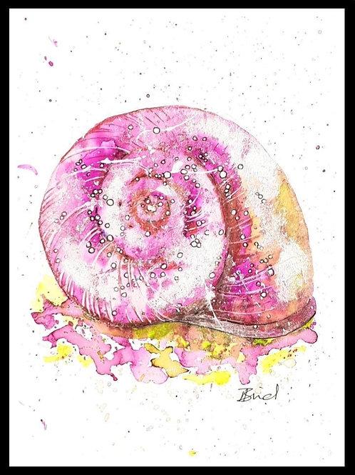 Pink Spiral Shell