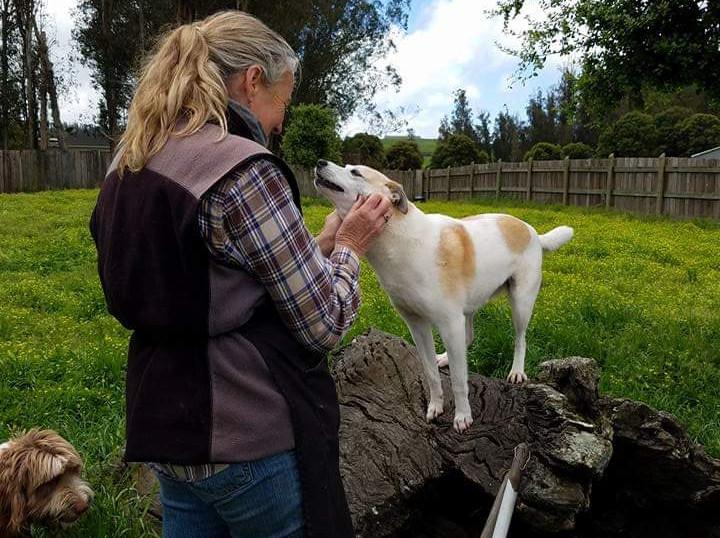 In-Home Dog Obedience Training in Sebastopol, CA