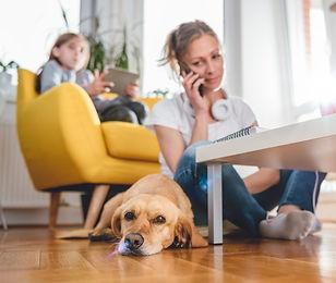 On line dog training
