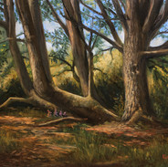 Study from Nature, Discovery Park, Oil on Panel, 9 x 12, 2020