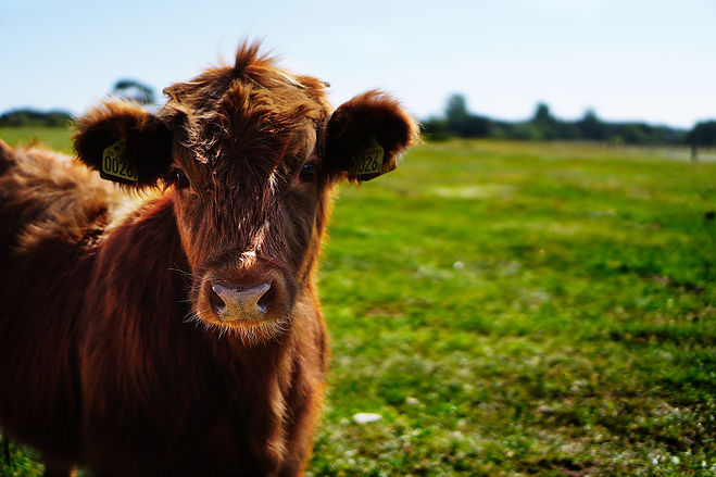 agricultural-agriculture-animal-162240.j