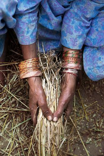 Women working. Kangra, India