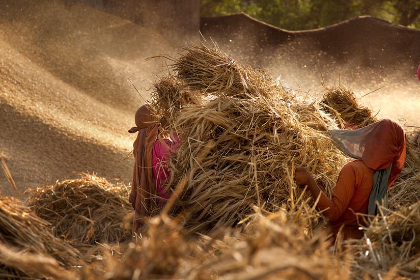 Women working. Bir, India