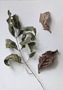 Swirly Leaf Trompe l'oeil