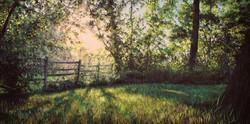 Splendor by the Field