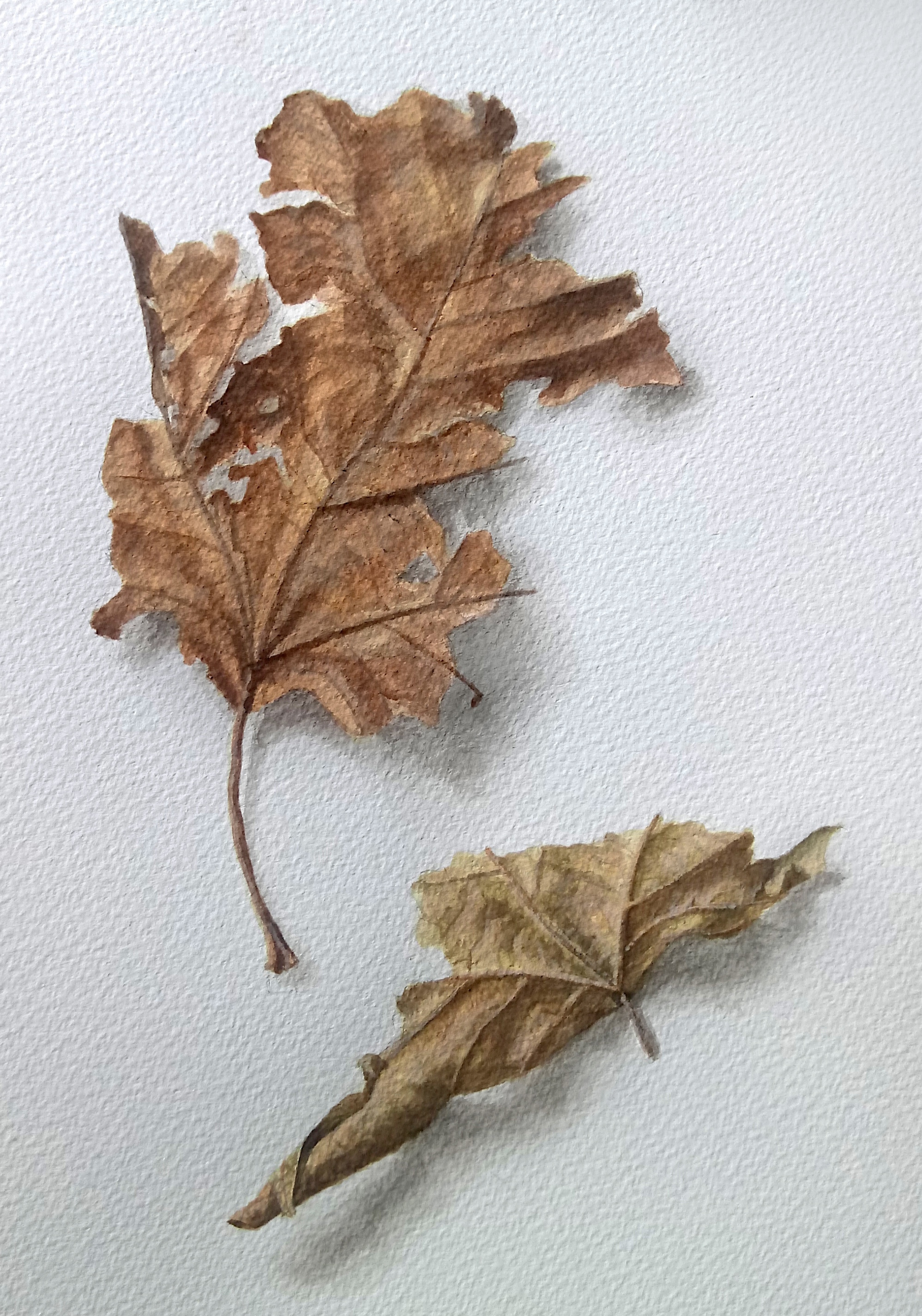 Two Brown leaves