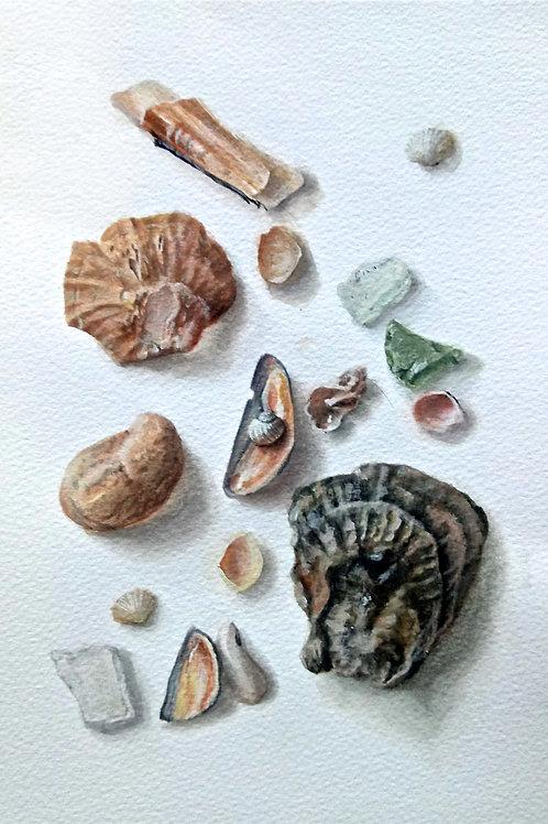 Seashells Trompe l'oeil