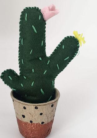 mini-cactus-childrens-party-hunter-gathe