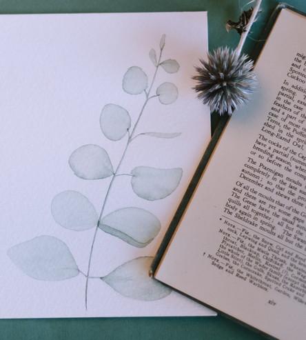 Eucalyptus watercolour illustration