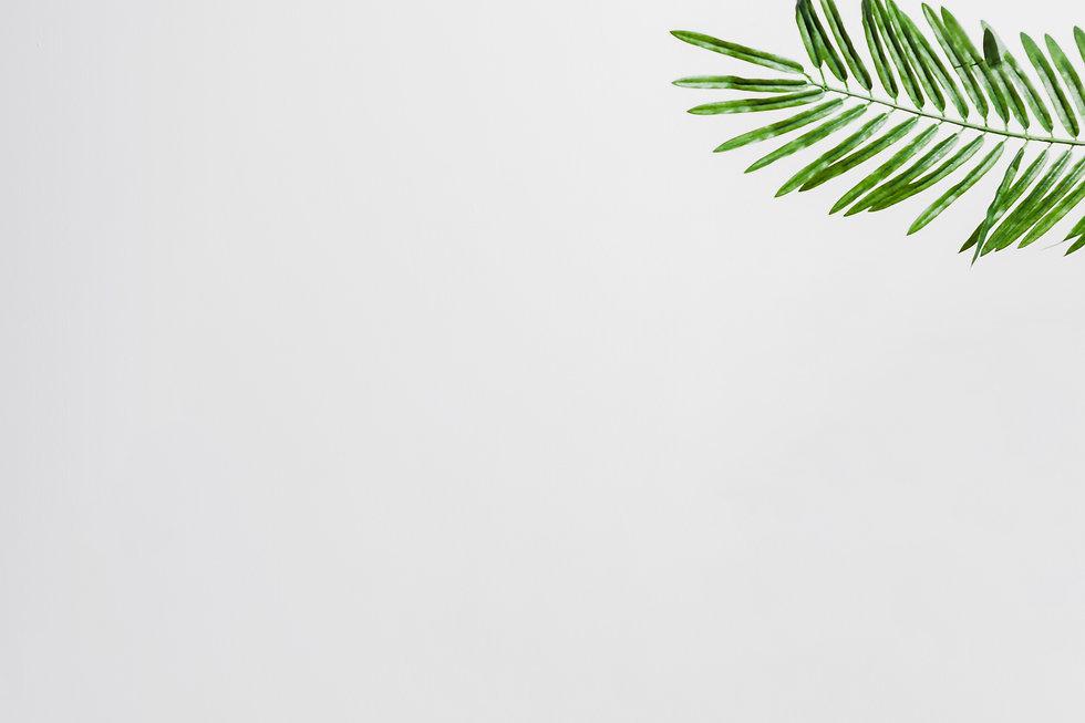 natural-green-palm-leaves-corner-white-b
