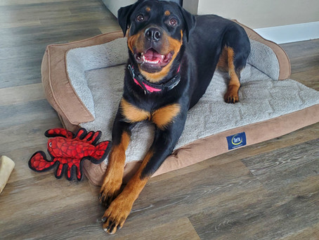 Sparta is up for Adoption!