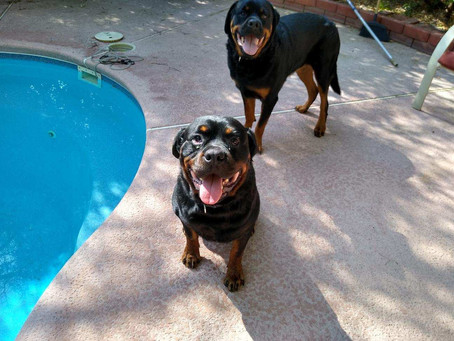 Max#3&Rogue bonded Up For Adoption!