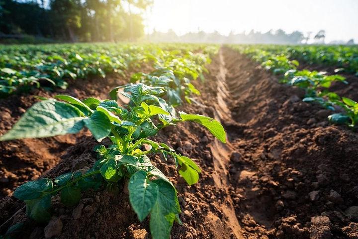 agricoltura1-1024x683.jpg