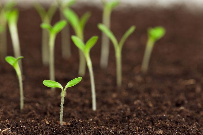 agricoltura bio.jpg