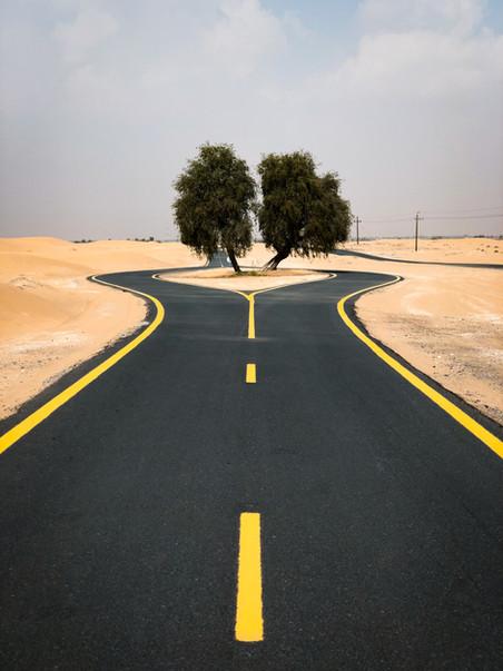 Al Qudra Ghaf Trees