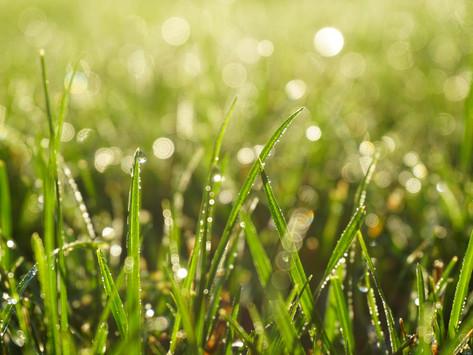 El suelo: un soporte esencial para el desarrollo de la vida