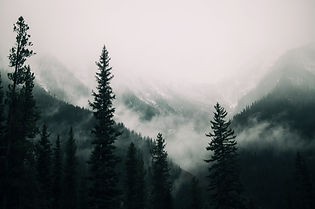 tall-trees-forest-mountains-covered-with