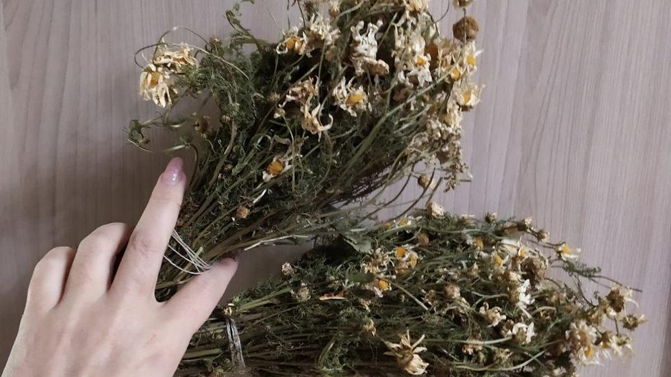 Цветы ромашки в веничке