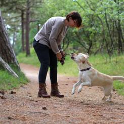 Ich liebe lange Spaziergänge & apportiere gern. Typisch Labrador Retriever!
