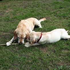Hallo ich bin Wilma!  Liebevoll aufgewachsen mit einem Westie und einem Labrador/Golden. Wir 3 hatten richtig viel Spaß!
