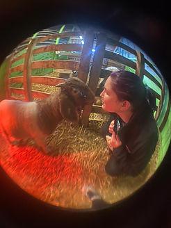 Imbuzi our baby boer goat