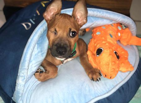 Kodiak: The Miracle Pup