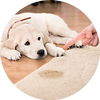 his-carpet-cleaning-services-pet-odor-el