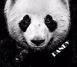 Pandy_allnew.png