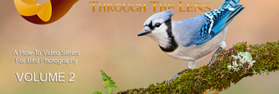(a) Birds Through The Lens Vol.2