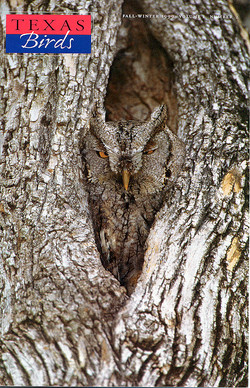 owl-cover