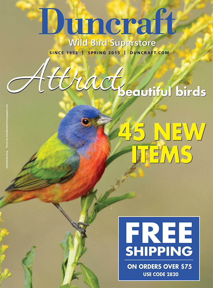 Alan_Murphy_SP15_Cover_Painted_Bunting