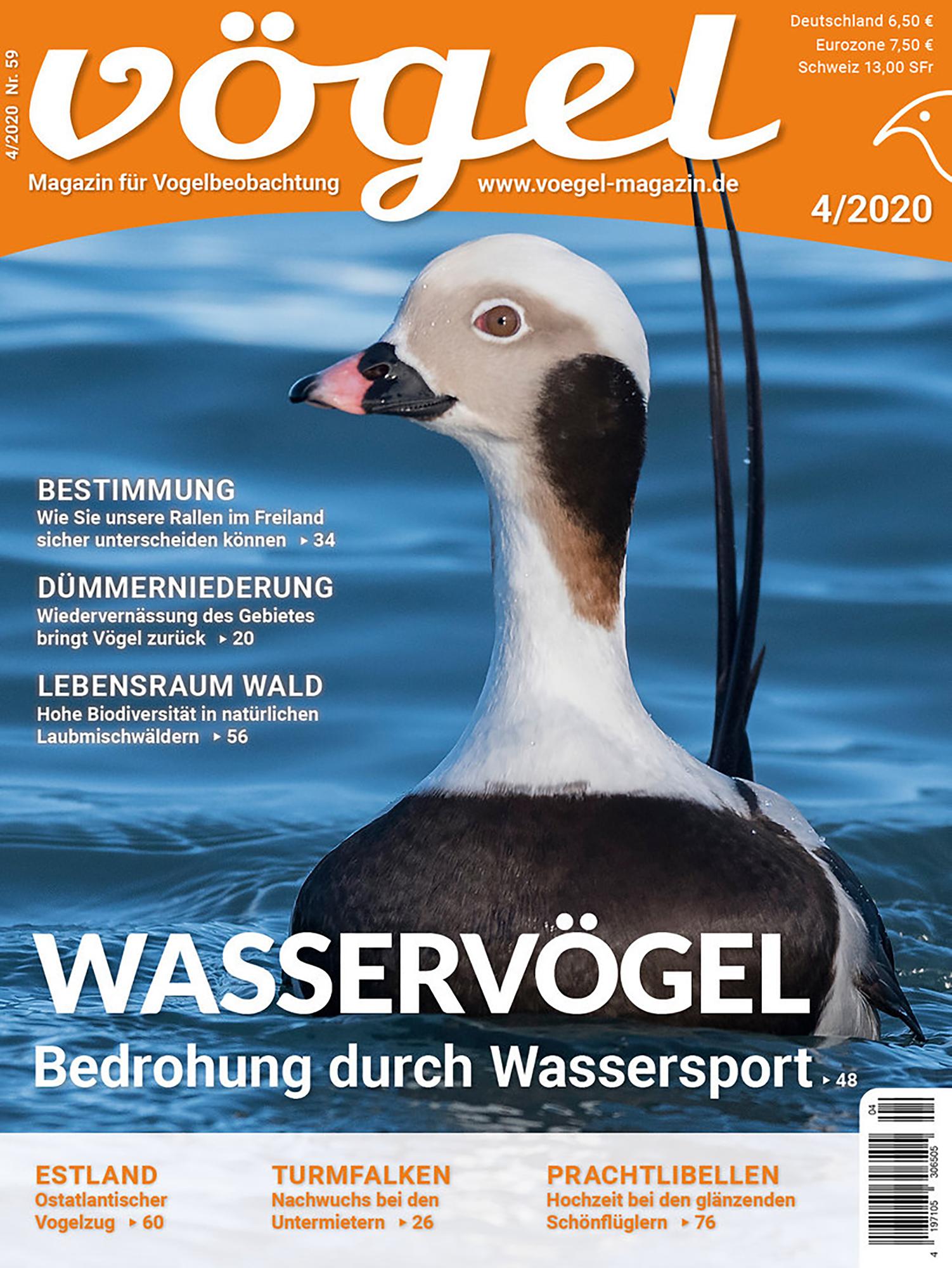 Voegel_2020-04_s01
