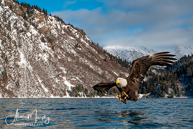 383 | Kachemak Bay | Alaska | Feb .jpg