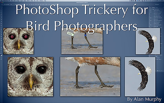 (a) PhotoShop Trickery For Bird Photographers