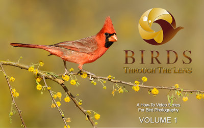 Birds Through The Lens Vol. 1