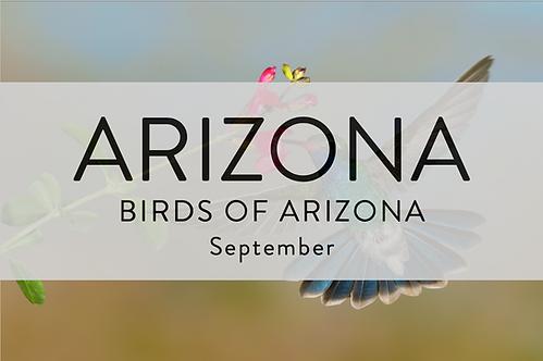 Birds of Arizona | Arizona