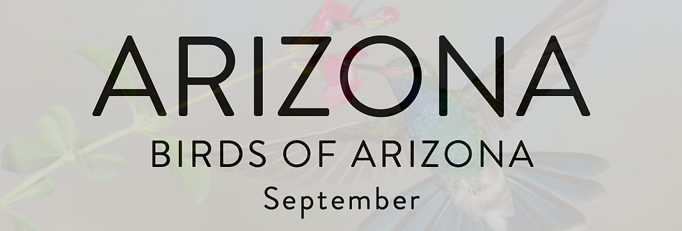 Birds of Arizona | Arizona 2020