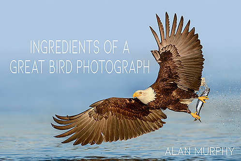 The Ingredients Of A Great Bird Photograph