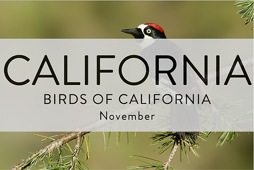Birds of California | California | 2022